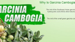 contribution towards weight loss by garcinia