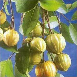 From The Experts Garcinia Cambogia