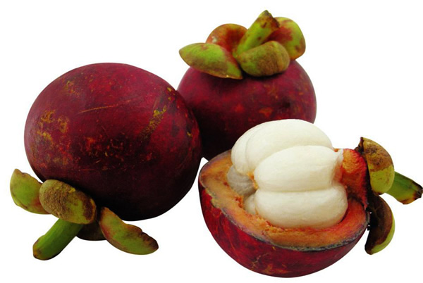 garcinia cambogia fruit for sale uk