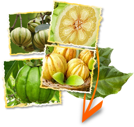 Garcinia Cambogia extract is an all-natural way to lose weight
