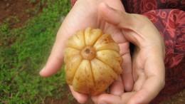 health benefits of garcinia cambogia