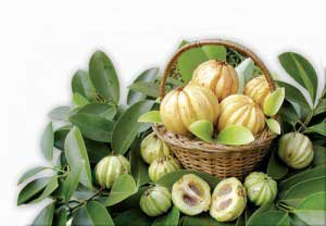 fat blocking ability of garcinia