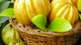 health and overall development by garcinia