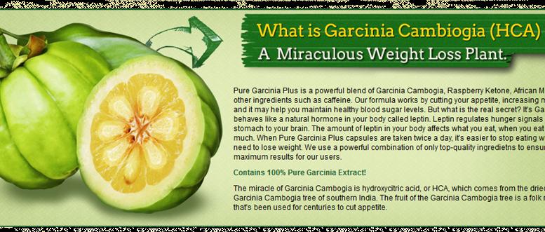 garcinia cambogia also possesses antiseptic properties