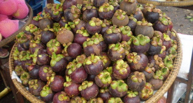 Garcinia fruit in the news