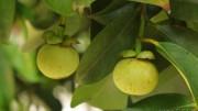 garcinia provides haelth concious lifestyle