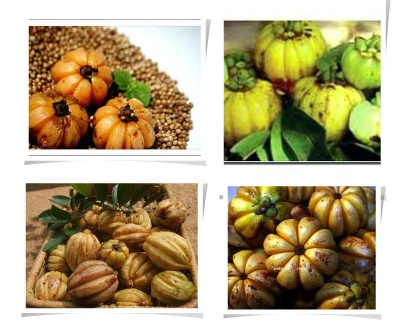 garcinia cambogia called in gujarati